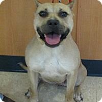 Adopt A Pet :: Mystic - Ludington, MI