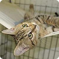 Adopt A Pet :: Poppette #4 - Lunenburg, MA