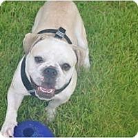 Adopt A Pet :: stitch - conyers, GA