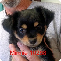 Adopt A Pet :: Minnie - Greencastle, NC