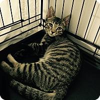 Adopt A Pet :: Gary - Speonk, NY