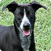 Adopt A Pet :: Sady - Lufkin, TX
