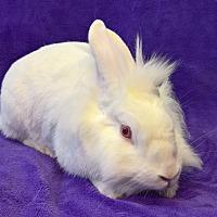 Adopt A Pet :: Lewis - Lewisville, TX