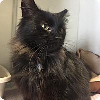 Adopt A Pet :: Rain - Tioga, PA