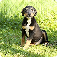 Adopt A Pet :: Ewok - Auburn, CA