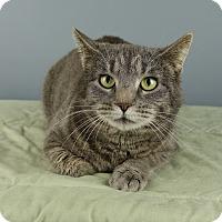 Adopt A Pet :: Patty Ann - Columbia, IL