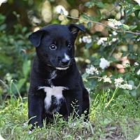 Adopt A Pet :: Bright - Groton, MA