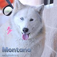 Adopt A Pet :: Montana--Coming soon! - Carrollton, TX