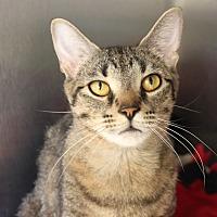 Adopt A Pet :: Upendi - Naperville, IL