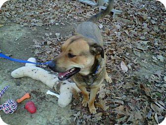 Labrador Retriever/Shepherd (Unknown Type) Mix Dog for adoption in Bedford, Virginia - Chance