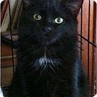 Adopt A Pet :: Eclipse - Port Republic, MD