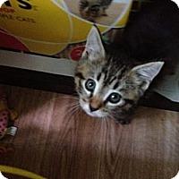 Adopt A Pet :: Miley - Monroe, GA