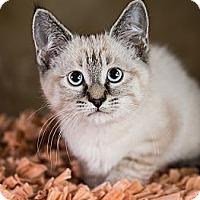 Adopt A Pet :: Tavi - Eagan, MN