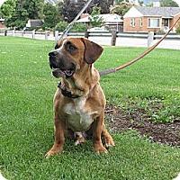 Adopt A Pet :: Psy - Roosevelt, UT