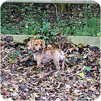 Adopt A Pet :: Cassie - Washington, NC