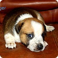 Adopt A Pet :: Ranger - Austin, TX