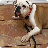 Adopt A Pet :: Max - Odessa, FL