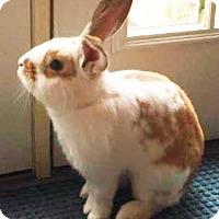 Adopt A Pet :: Peter - Hillside, NJ