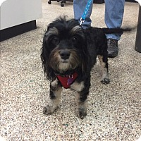 Adopt A Pet :: Hanna - Thousand Oaks, CA