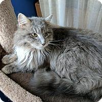 Adopt A Pet :: James - Fairborn, OH