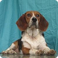 Adopt A Pet :: Susie Q - LaGrange, KY