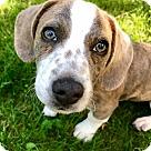 Adopt A Pet :: Willis (RBF)