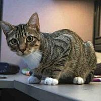 Adopt A Pet :: HARLEY - Naples, FL