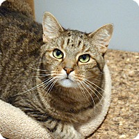 Adopt A Pet :: Isaac - Lincoln, NE