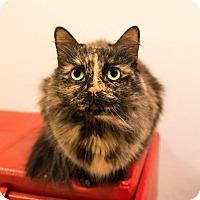Adopt A Pet :: Dizz - Seville, OH