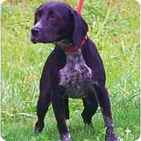 Adopt A Pet :: Oreo - Toronto/Etobicoke/GTA, ON
