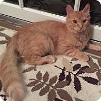 Adopt A Pet :: Scottie - East Hanover, NJ