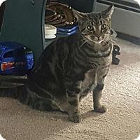 Adopt A Pet :: Sam - Nesquehoning, PA