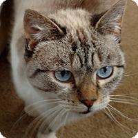 Adopt A Pet :: Brooke-Adoption Pending! - Colmar, PA