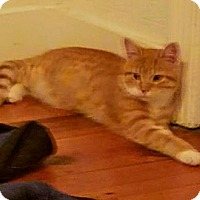 Adopt A Pet :: Lea - Gerrardstown, WV