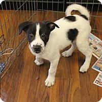 Adopt A Pet :: Brady - Sparta, NJ