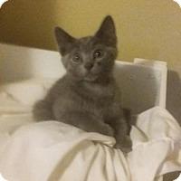 Adopt A Pet :: Nate - Orlando, FL