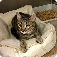 Adopt A Pet :: Beau - Colmar, PA