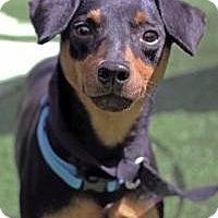 Adopt A Pet :: Austin - Mount Gretna, PA