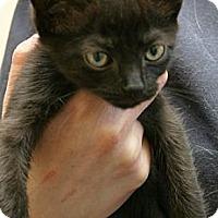 Adopt A Pet :: Home Fries - Secaucus, NJ