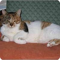 Adopt A Pet :: Marilla - North Boston, NY