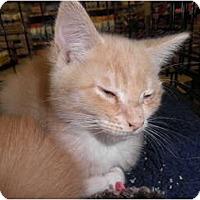Adopt A Pet :: Khaki - Warren, MI