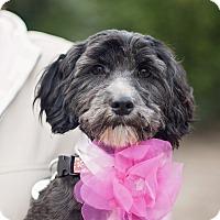 Adopt A Pet :: Emmi - Kingwood, TX
