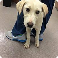 Adopt A Pet :: Marley - Cumming, GA