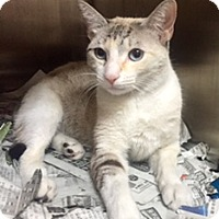 Adopt A Pet :: Neptune - Whitestone, NY