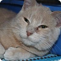 Adopt A Pet :: Vulcan - Hamilton, ON