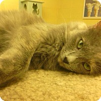 Adopt A Pet :: Sweet'ums - Lake Charles, LA