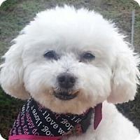 Adopt A Pet :: Faith - La Costa, CA