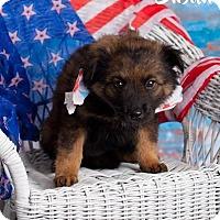 Adopt A Pet :: Susan - Scottsdale, AZ