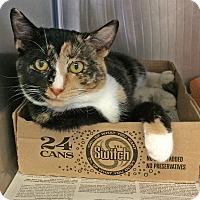 Adopt A Pet :: Sissy - East Brunswick, NJ