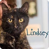 Adopt A Pet :: Lindsay - Somerset, PA